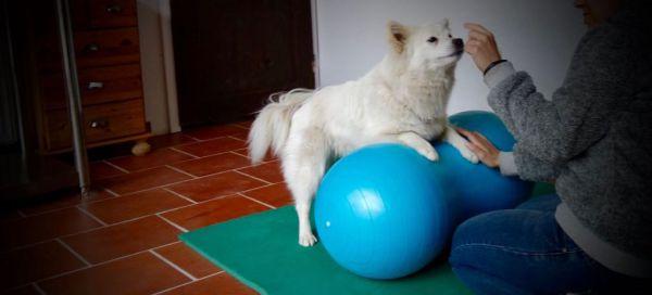 Physiotherapie Hund Muskelaufbau
