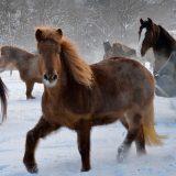 Dorntherapie Pferd, Manueltherapie Pferd,