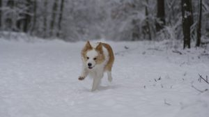 Lebenslust und Bewegungsfreude - ein Hund tobt im Schnee